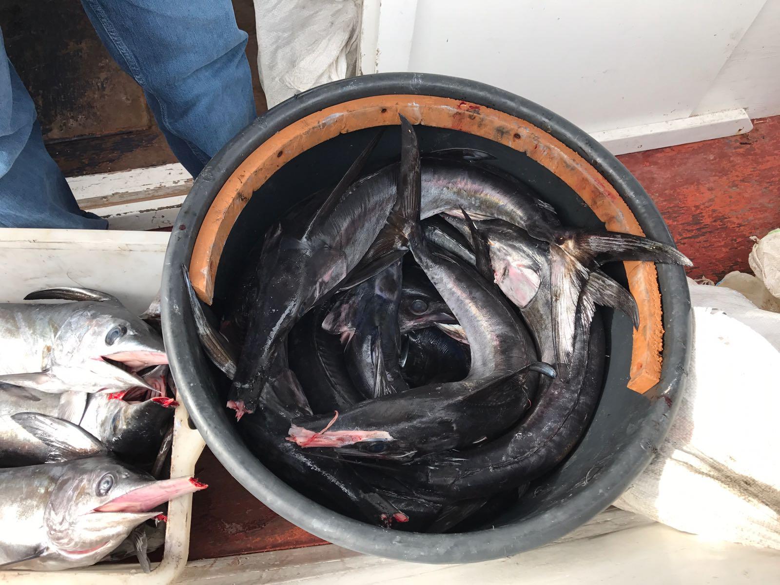 sequestro-pesce-guardia-costiera-roccella