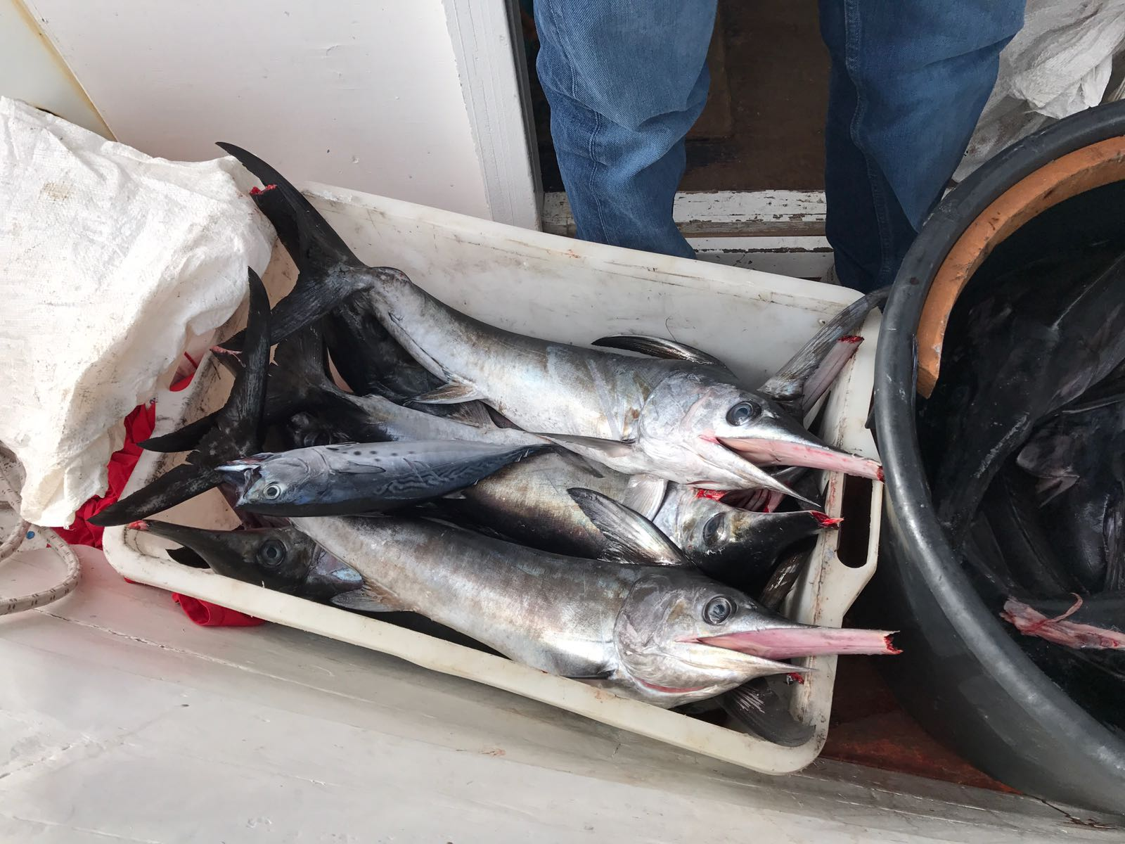 sequestro-pesce-guardia-costiera-roccella3