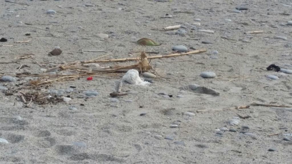 oggetto spiaggia marina 3