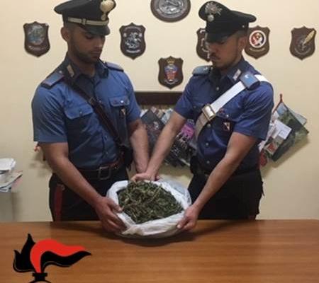 Rinvenuta cannabis indica in un casolare sequestro dei cc for Sinopoli arredamenti